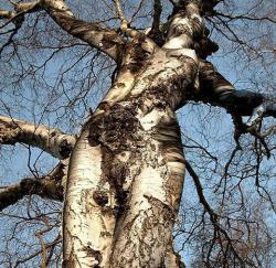 Femme arbre2